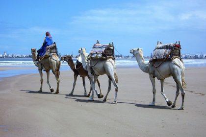 Morocco Family tour